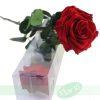 Rosa Preservada