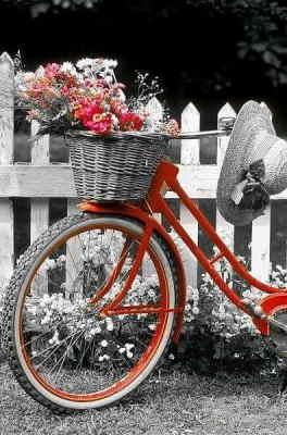 enviar flores en La Coruña, enviar flores urgentes en Sevilla, enviar flores urgentes en Cordoba, enviar flores bonitas en Tarragona, enviar flores en San Sebastian, regalar flores baratas, enviar flores para el día de la madre