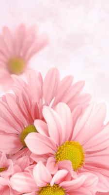 regalar flores para cumpleaños a domicilio, enviar flores para cumpleaños urgentes en Madrid, Arreglos Florales, regalar flores para un cumpleaños en Barcelona, mandar flores a mi hermana, regalar flores el día de la madre en, mandar flores, el regalo perfecto, ramo de margaritas a domicilio, enviar flores urgentes a domicilio, Floristería Online, enviar flores a domicilio baratas