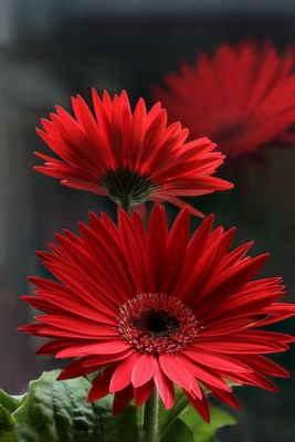 enviar flores de cumpleaños en Zaragoza, Floristería Online, enviar flores de regalo en Madrid, enviar flores para el día de la madre en Barcelona, enviar flores en Alicante, Centros de flores para cumpleaños