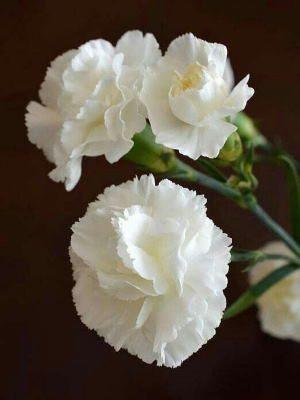 flores baratas a domicilio, flores para mi abuela económicas, flores para mi madre, flores para el día de la madre, regalar flores el día de la madre, flores para condolencias