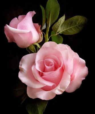 Centro de Flores de Regalo, Rosas Rosas para Regalar, Floristería Online, Arte Floral, Centro de Rosas y Lilium Rosados