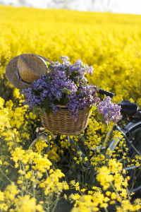 regalar flores silvestres, enviar flores para nacimiento, regalar flores para una novia, floristas profesionales, regalar flores a una amiga, enviar flores urgentes en España, regalar flores