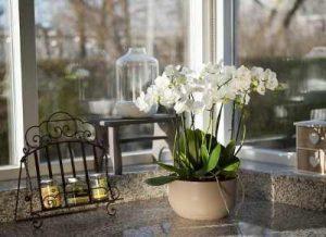 Enviar plantas en Madrid, Mandar plantas en Madrid, Enviar orquídeas, Decoración otoñal, enviar plantas, plantas a domicilio