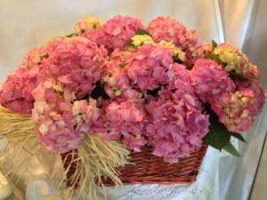 enviar plantas a domicilio, regalar plantas a domicilio, envio de plantas plantas para regalar regalar hortensias, regalar guzmanias, regalar orquideas a domicilio