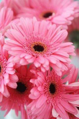 centro de flores para regalo, centros de flores para cumpleaños, centros de flores para nacimiento, centro de flores para el hospital, flores para un nacimiento