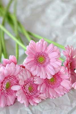 mandar flores a mi madre a domicilio, enviar flores a domicilio baratas, flores para el día de la madre, flores para un nacimiento, flores para un aniversario, Ramo de Gerberas Variadas, Floristería Online, Ramos de Flores para Regalar, enviar flores para cumpleaños, flores para cumpleaños