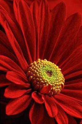 enviar flores para cumpleaños, regalar cestas de flores a domicilio, cestas de flores para nacimiento, cestas de flores para el día de la madre, cestas de flores para cumpleaños, cestas de flores a domicilio a buen precio