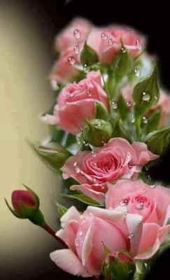rosas de regalo, rosas de cumpleaños a domicilio, envío de rosas baratas a domicilio, enviar rosas a domicilio para un cumpleaños, Centro Variado Blancos y Rosados, Arreglos Florales, enviar rosas a mi madre, enviar rosas el día de la madre, enviar rosas para un aniversario a domicilio, enviar rosas urgentes